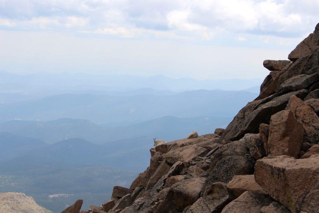 Mount Evans Aussicht Bergziegen