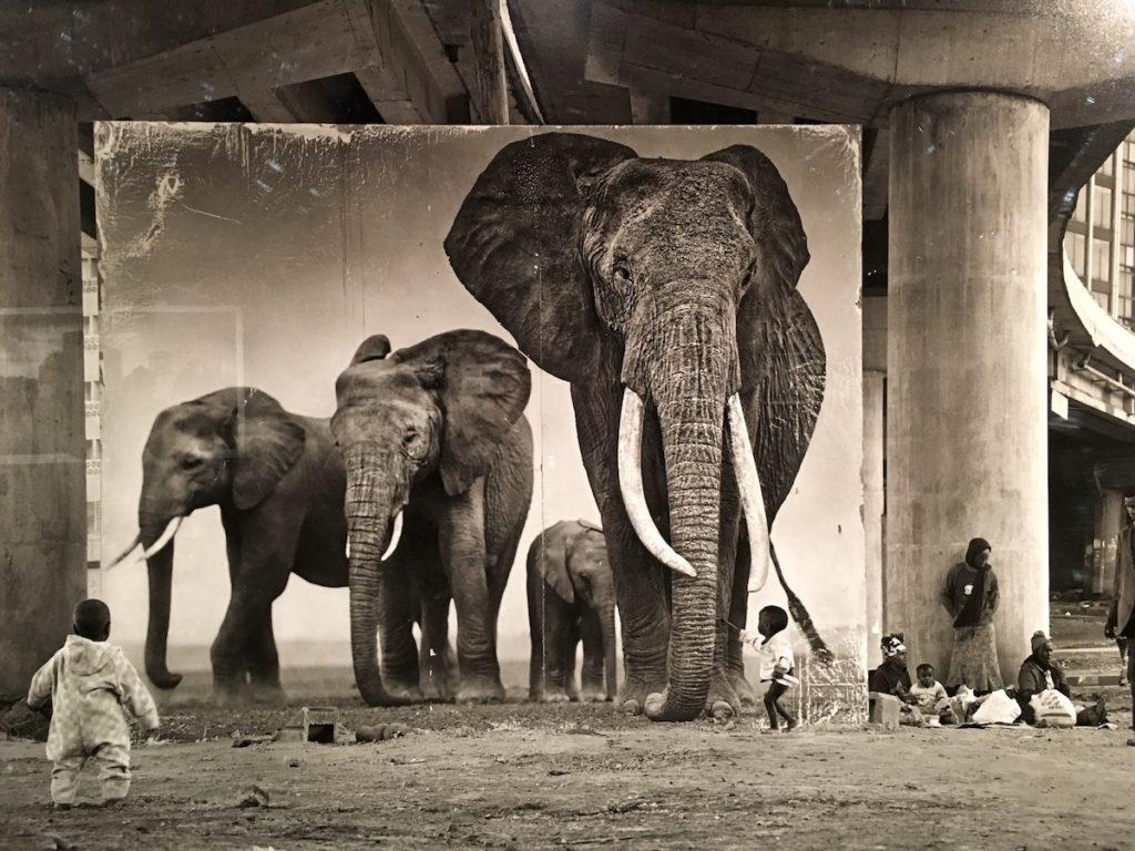 Umwelt Afrika Reisen